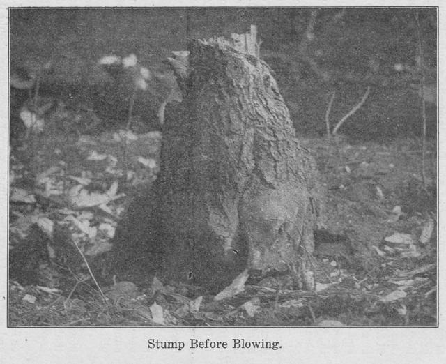 stumpBeforeBlowing