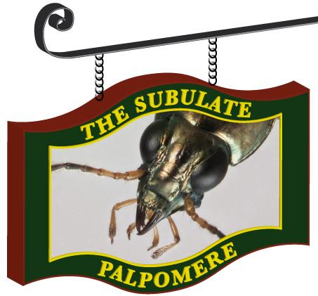 SubulatePalpomereNew