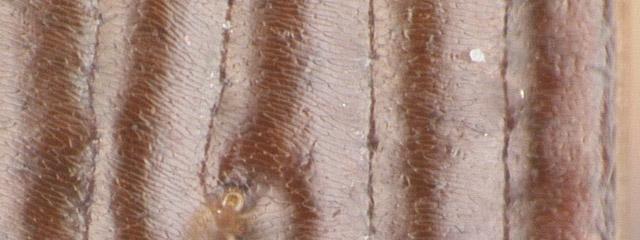 Specimen DNA1354, Montana