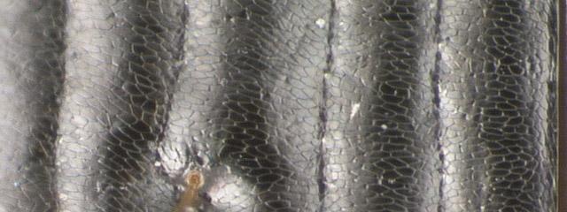 Specimen DNA2572, Oregon