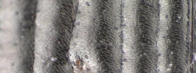 Specimen DNA2735, British Columbia