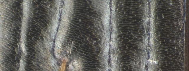 Specimen DNA3256, California