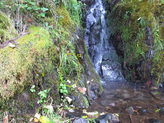 Alder Creek Falls, Marys Peak, OR