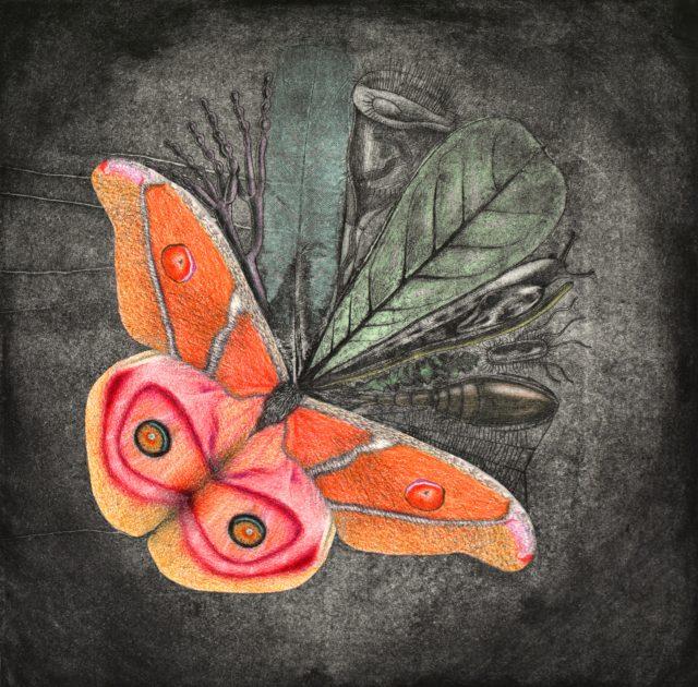 Biodiversity by Barrett Klein