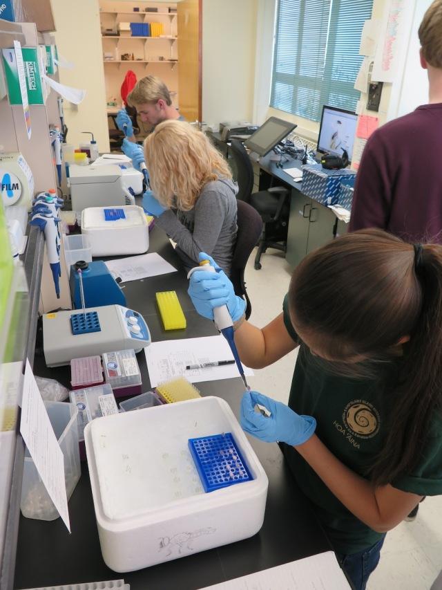 preparing PCR